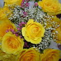 Phyllis' roses